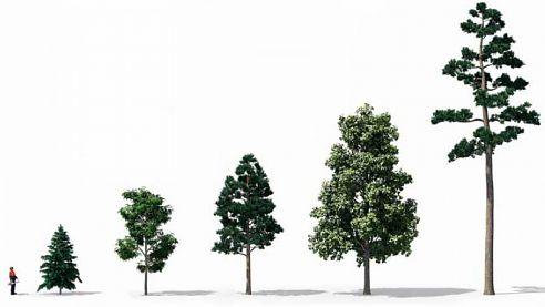 Žádost o povolení ke kácení stromů a keřů rostoucích mimo les