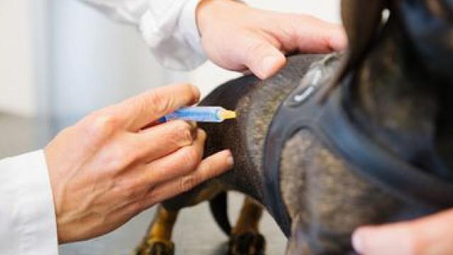 internet - Očkování psů
